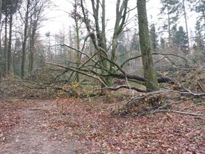 Handewitter Forst am 16.11.2013
