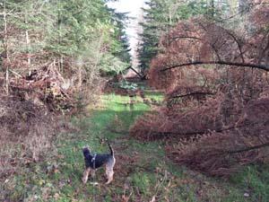 Wald bei Wallsbüll am 17.11.2013