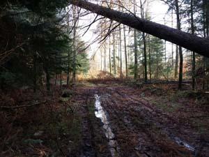 Wald bei Wallsb�ll am 17.11.2013